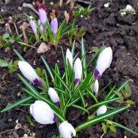 И к нам пришла весна! :: Ирина ***
