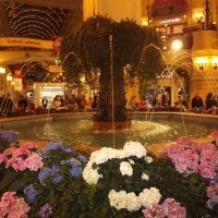 Встречаемся у фонтана! :: Нина Андронова