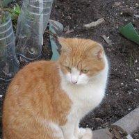 Уличный кот. :: Зинаида