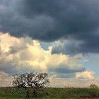 Волнуются с тревогой облака. :: Лесо-Вед (Баранов)