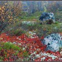 Осень :: Владимир Стаценко