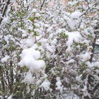Зима вернулась 27 апреля :: Елена Семигина