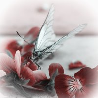 Бабочка :: Алена Афанасьева