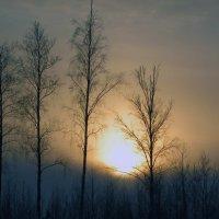 Морозный день на исходе... :: Сергей