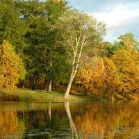 Осень в парке :: Юрий Цыплятников