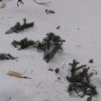 Следы на снегу :: Ольга Иргит