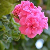 цветы :: Сергей Благодатских