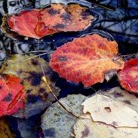 Осень... :: Elena N