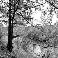 Осенний ч.б. пейзаж. :: Наталья Юрова