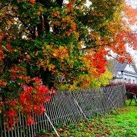 ...пёстрая осень...  ...из серии..Узоры русской деревни... :: Ира Егорова :)))