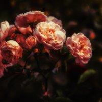 Как хороши, как свежи были розы... :: SergioSt