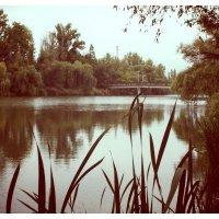 гидропарк города Хрьков :: Виктория