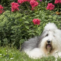 в цветочках :: Лариса Батурова