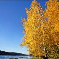 Осень на берегах Енисея. Хакасия :: MaOla ***