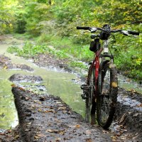 Велосипед в лесу :: Alexandr Grishin