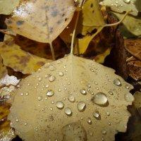 Осенняя грусть 2 :: Сергей Комков