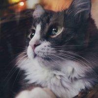 Animal :: Любовь Нефедова