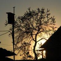 вечер в деревне :: Светлана Макурина