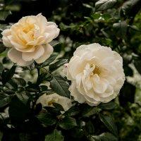 Цветы :: Марк Э