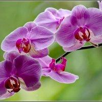 У окна :: Виолетта
