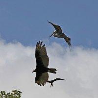 Птички. :: Алексей Пышненко