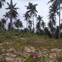 Гаитянский лес. :: Алексей Пышненко