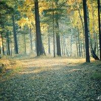 лес :: Юлька Васковская