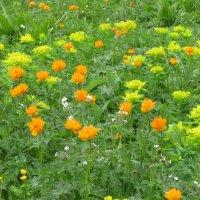 Таежные цветы :: Ольга Иргит