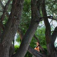 В руках дерева :: Евгения Губарева