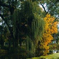 Осень :: Андрей Канивец