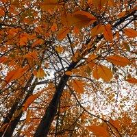 Осеннее настроение... :: Денис Филиппов
