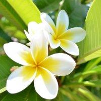 Цветы Кипра :: Ольга Бубнова