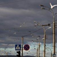 птицы :: Наталья Василькова