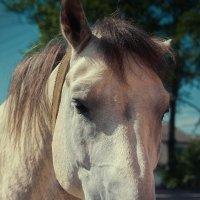 Белый конь :: Алексей Кучин