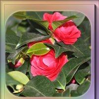 В оранжерее зимой 2... :: Nonna