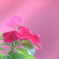 цветочек :: Viacheslav Birukov