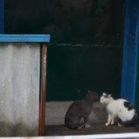 """""""Деловой разговор"""" :: Катерина Некрасова"""