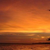Sun Set Bo Ke :: Igor Nekrasov