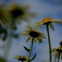 краски лета :: Алена Сухарева