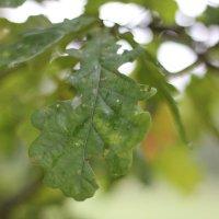После дождя :: Екатерина Коломиец