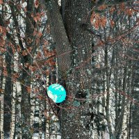 Остался на дереве. :: Евгения