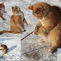 Как стать рыбаком !!! :: Владимир