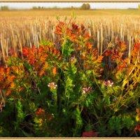 В чистом поле сорнячок... :: Удивительное Рядом