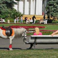 Блондинки ! :: Светлана Шестова
