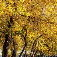 Осенний парк :: Павел Сухоребриков
