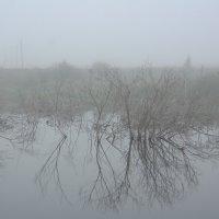 Туман над озером. :: Ирина Киямова