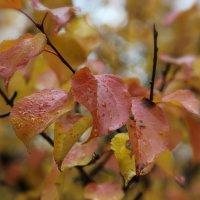 Осенняя пора :: Инна Матвеева