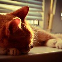 Рыжий кот :: Вячеслав Каликин