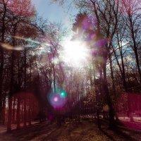 Солнечная :: Дарья Ашарина
