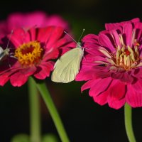 цветочки :: inna mac